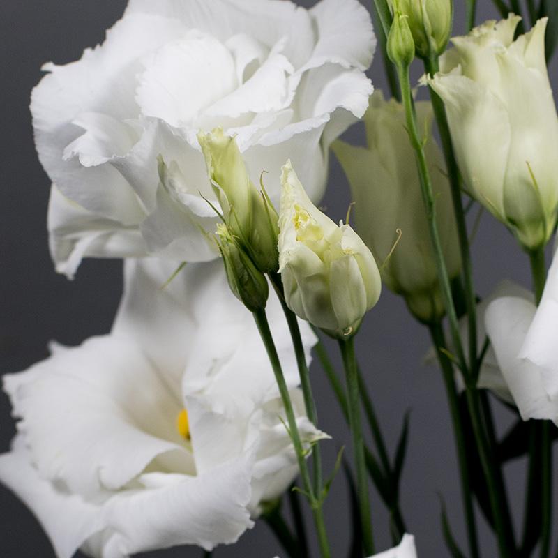 Lisianthus Echo 1 Pure White Imp