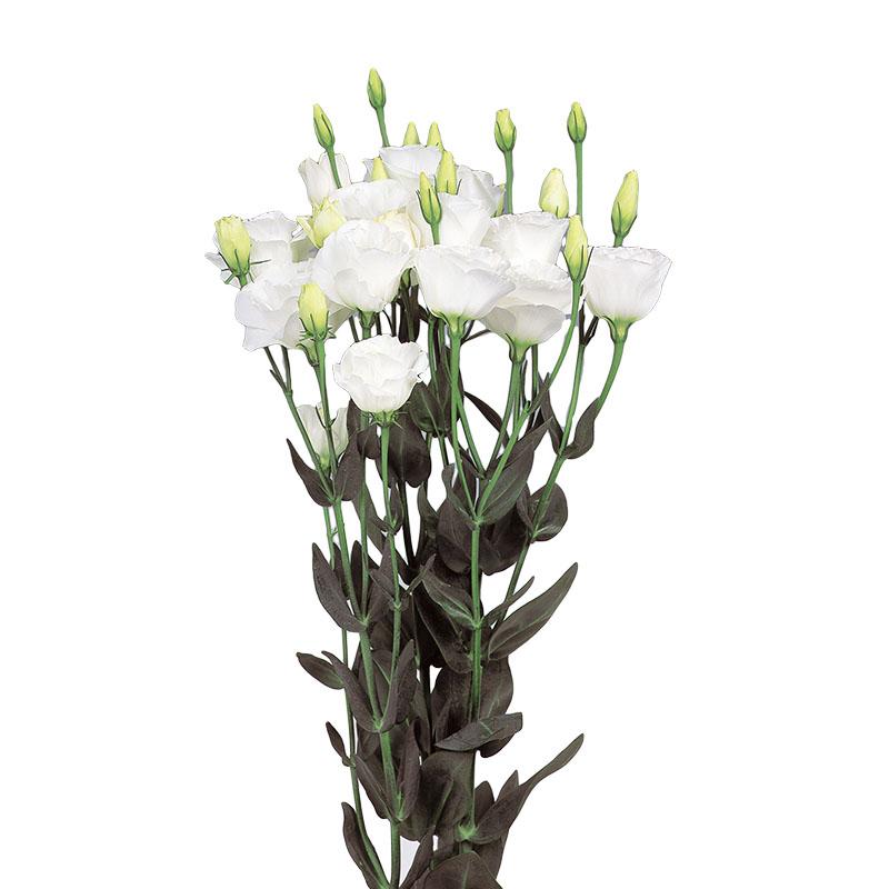 Lisianthus Excalibur 2 Pure White