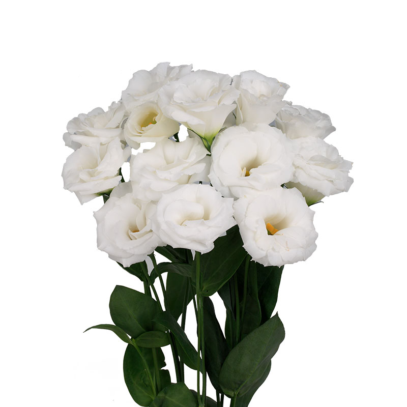 Lisianthus Robella Pure White