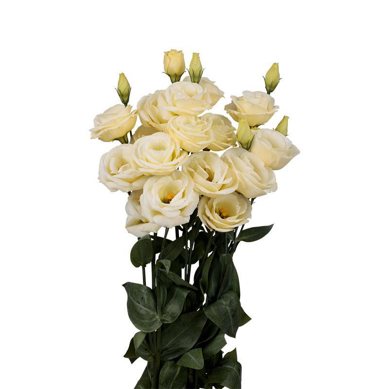Lisianthus Rosita 4 Yellow