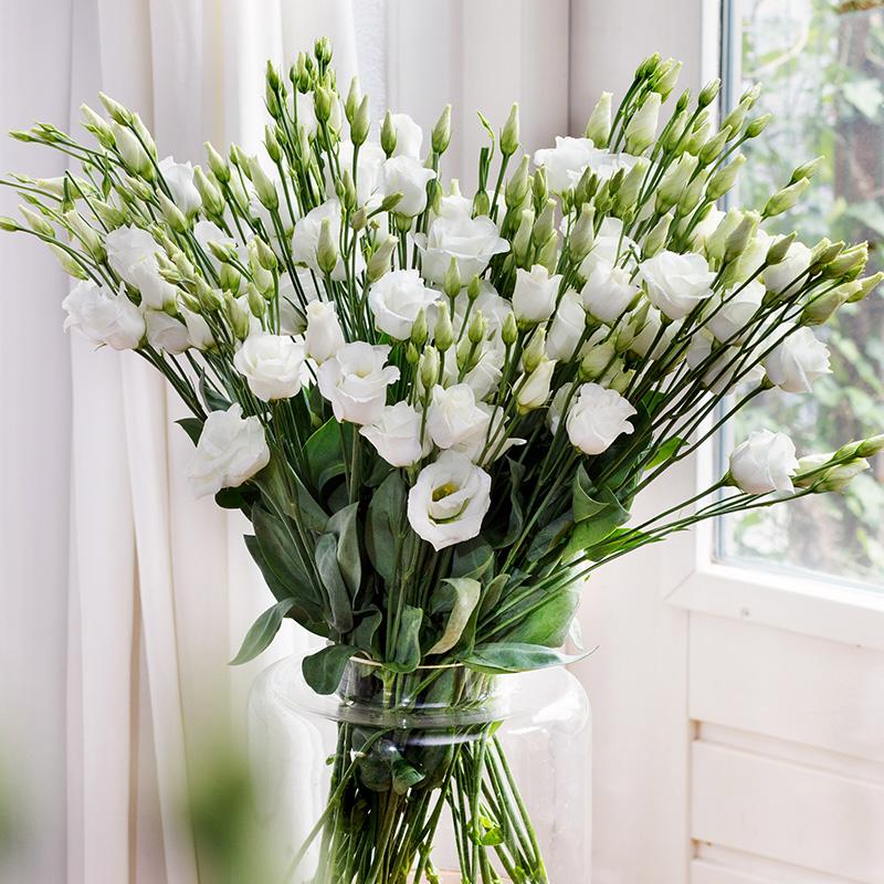 Lisianthus Rosita 1 Pure White