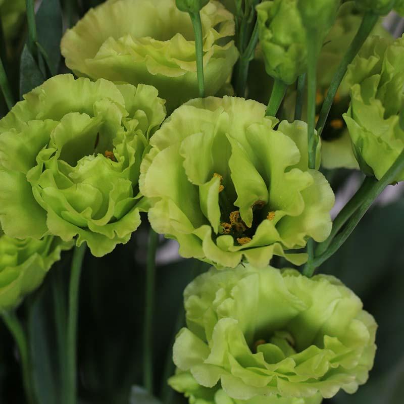 Rosanne-2-Bright-Green