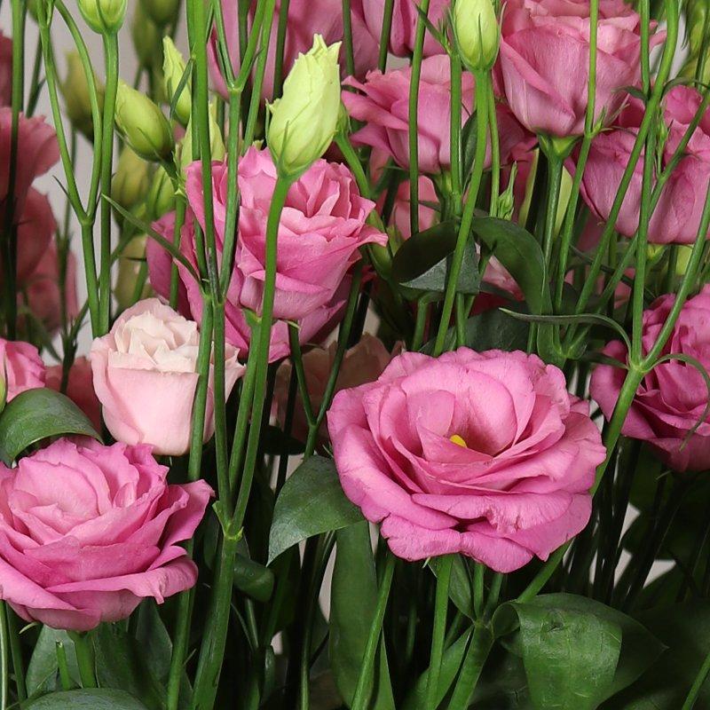 Rosita-2-Pink-Imp.
