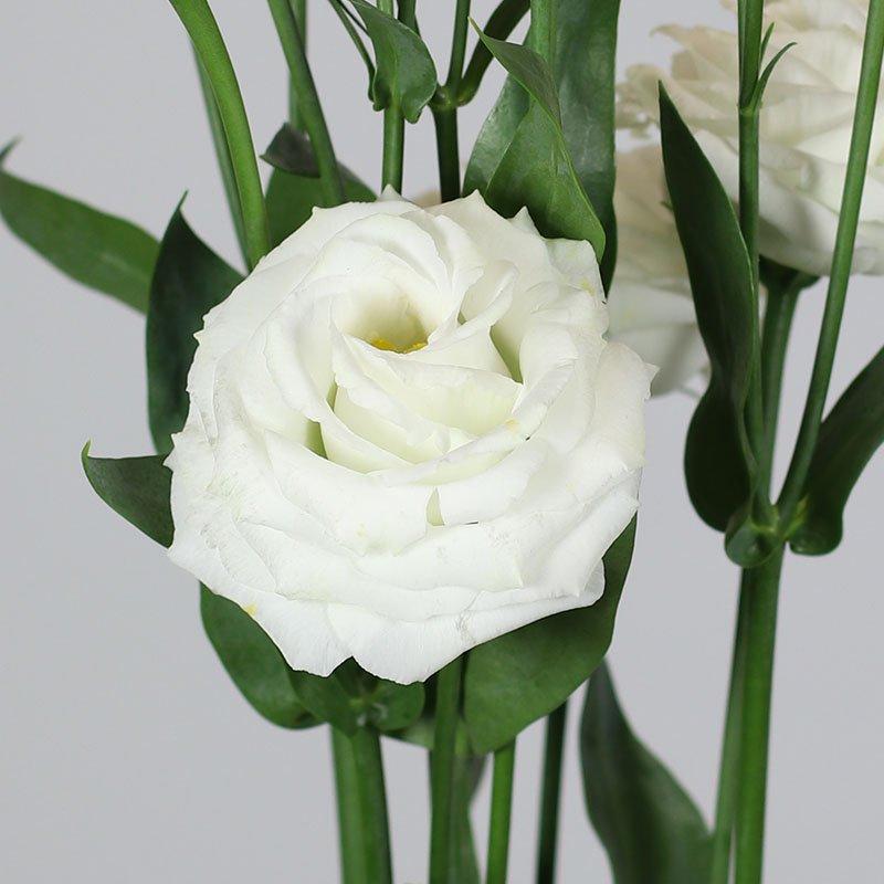Rosita-2-Pure-White