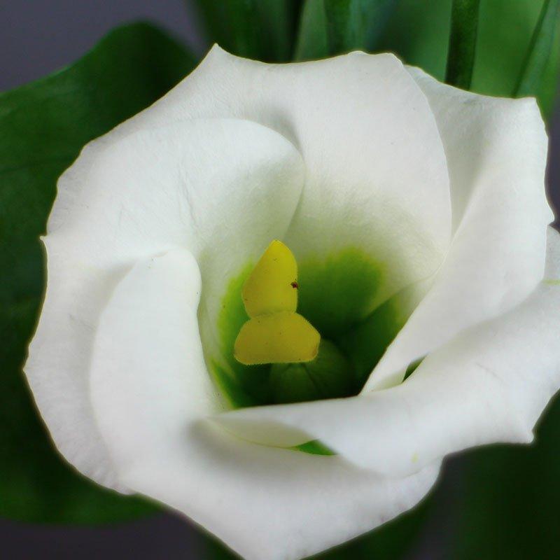 Solo-2-Pure-White